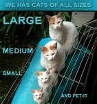 LOLcats-All-Sizes