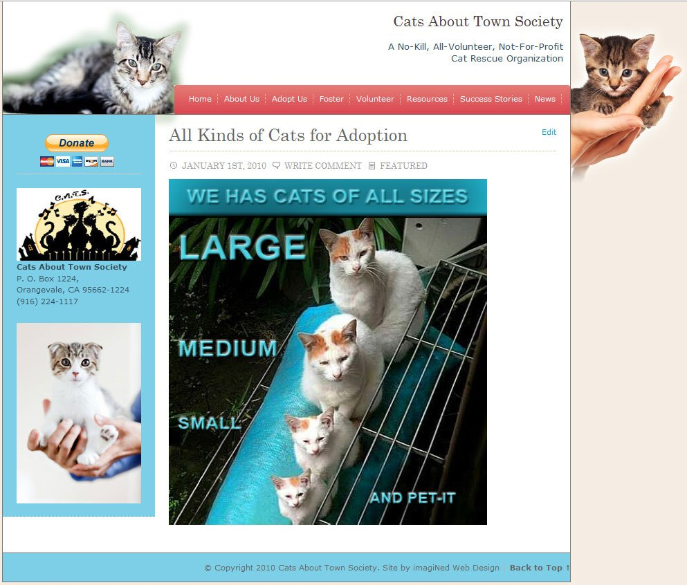 LOLCATS in a Cat Website