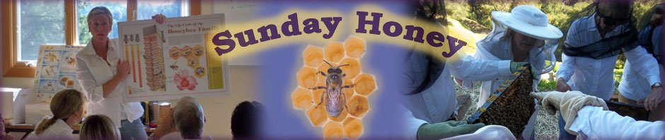 Sunday Honey - beekeeping classes header
