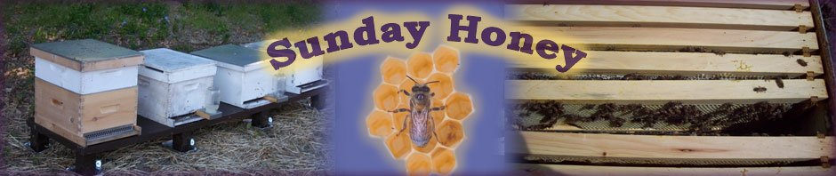 Sunday Honey - Hive maintenance header